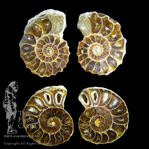 Fossils for jewelry