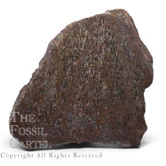 Dinosaur Bone Slab
