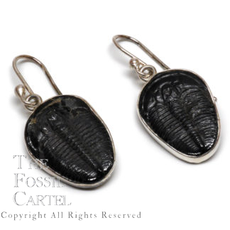 Trilobite Sterling Silver Earrings