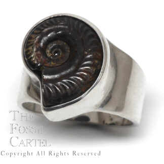 Ammonite Fossil Sterling Silver Ring; Size 10