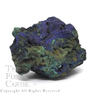 A gnarled looking specimen of dark blue azurite combined above dark malachite, with some druzy crystals, against a blank background.