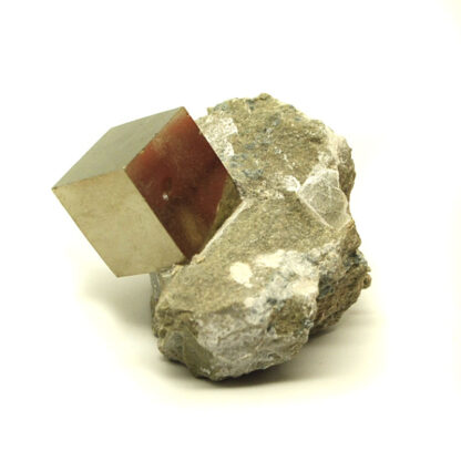 A natural cubic pyrite crystal in a tan matrix with a metallic luster photographed against a white background