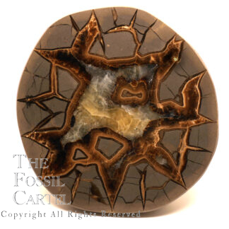 A polished septarian calcite nodule end with yellow calcite radiating from the middle of the nodule photographed against a white background