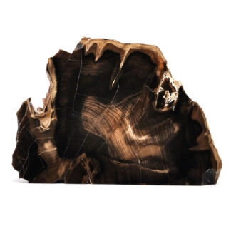A self standing petrified wood slab that has been polished on one side against a white background