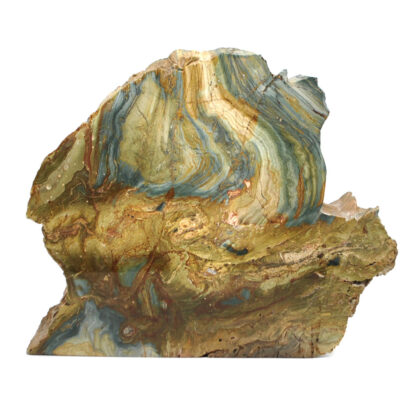 A petrified gary green bog fossil stand-up slab against a white background
